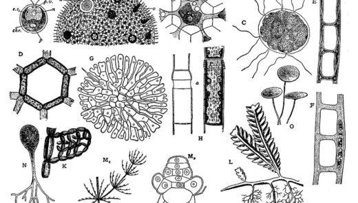 藻類とは? -実は曖昧な藻類の定義。その理由に迫る-