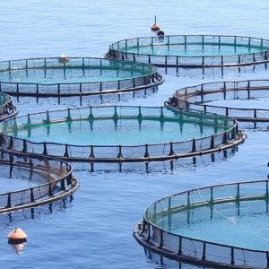 遺伝子組み換え藻類を使った、次世代の水産餌料