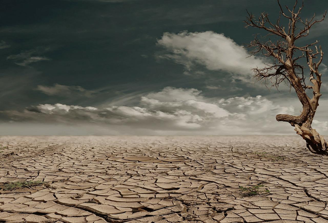 広大な砂漠を利用した藻類生産