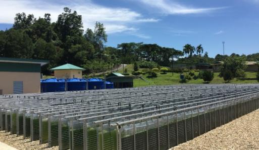 低コストで大規模化可能な3次元型の藻類培養設備を開発 〜熱帯環境下における世界最大級の藻類培養設備を公開します〜