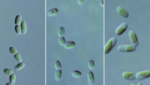 藻はどうやって生きているのか?-独立栄養と従属栄養の違い-