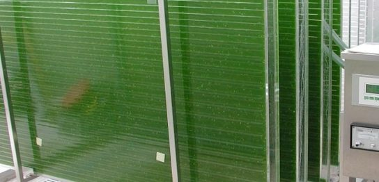 藻類培養の変遷 -円形ポンドから担持体培養まで-
