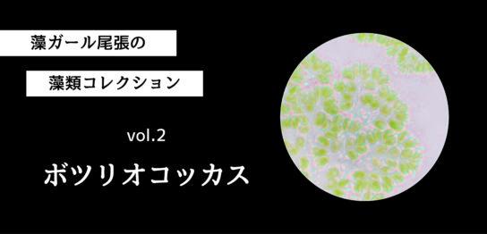 藻ガール尾張の藻類コレクション vol.2「ボツリオコッカス」