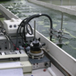 Biophysical Measurement of  Algal Photosynthesis Utilizing Chlorophyll Fluorescence