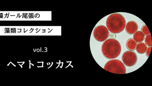 藻ガール尾張の藻類コレクション vol.3「ヘマトコッカス」