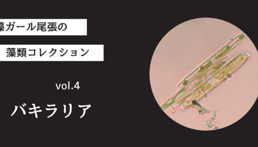 藻ガール尾張の藻類コレクション vol.4「バキラリア」