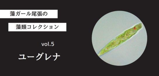 藻ガール尾張の藻類コレクション vol.5「ユーグレナ」