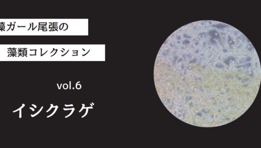 藻ガール尾張の藻類コレクション vol.6「イシクラゲ」