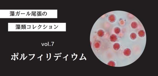 藻ガール尾張の藻類コレクション vol.7「ポルフィリディウム」