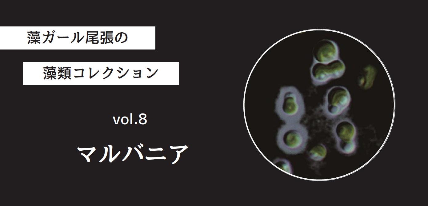 藻ガール尾張の藻類コレクション vol.8「マルバニア」
