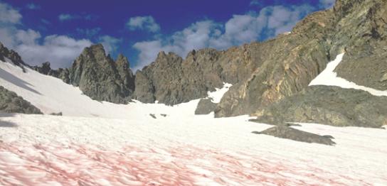氷雪藻とは?-北極も南極もつながる藻たち-