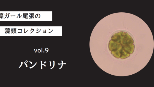 藻ガール尾張の藻類コレクション vol.9「パンドリナ」