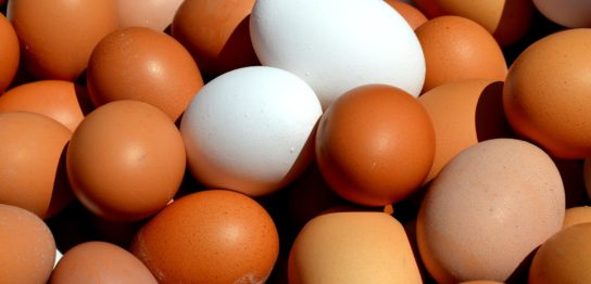 卵代替品市場に藻類が参入