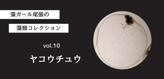 藻ガール尾張の藻類コレクション vol.10「ヤコウチュウ」