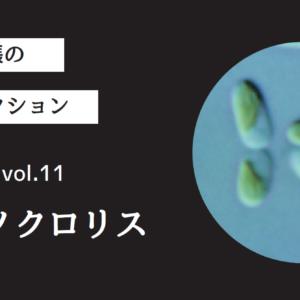 藻ガール尾張の藻類コレクション vol.11「ナノクロリス」
