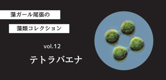 藻ガール尾張の藻類コレクション vol.12「テトラバエナ」