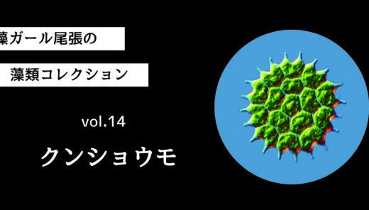 藻ガール尾張の藻類コレクション vol.14「クンショウモ」