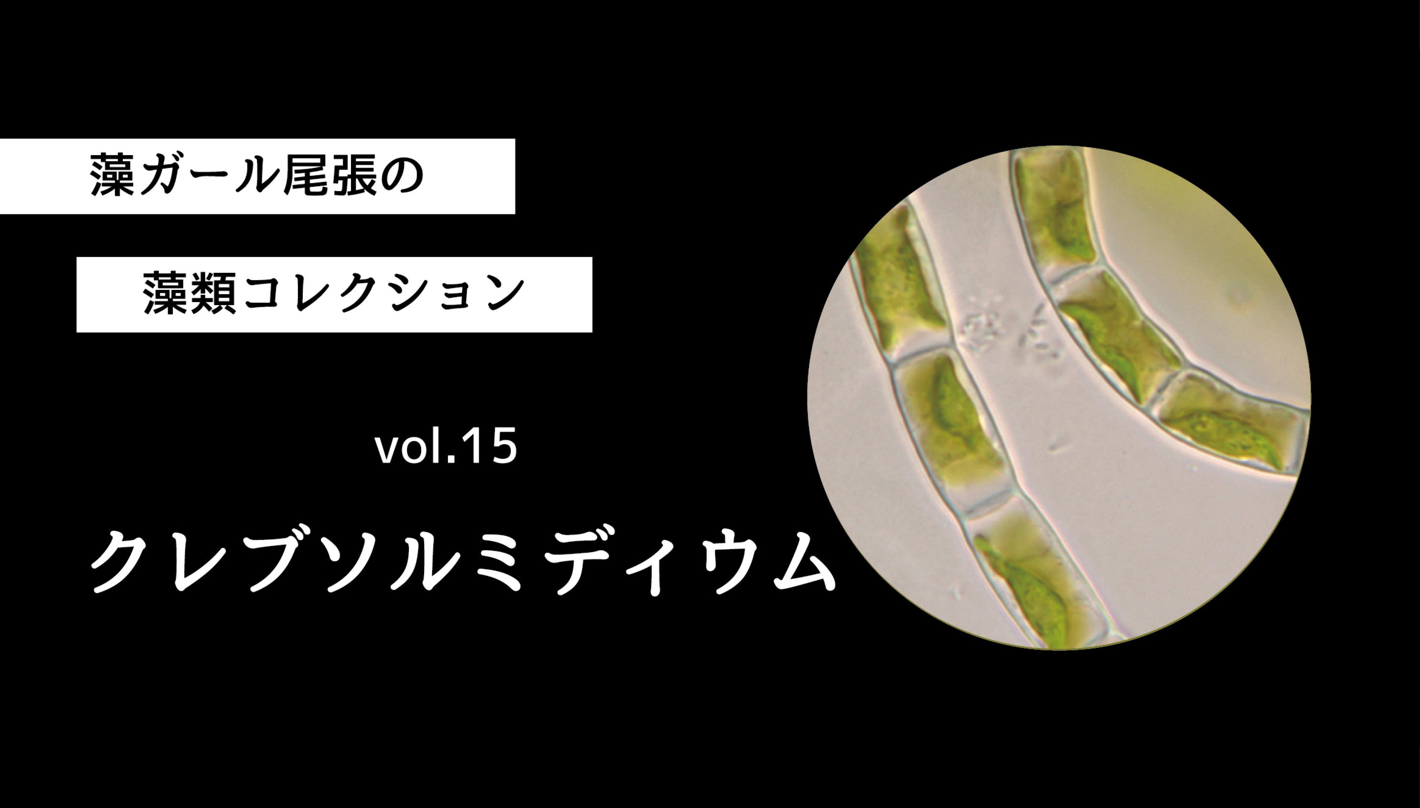藻ガール尾張の藻類コレクション vol.15 クレブソルミディウム
