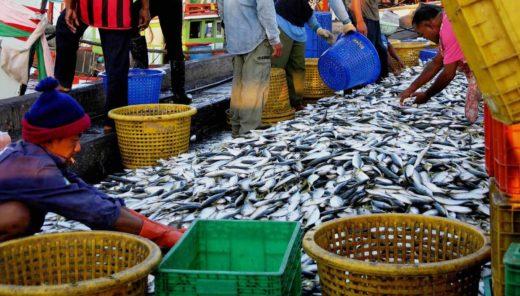 水産分野における藻類の利用 -現状と将来性-
