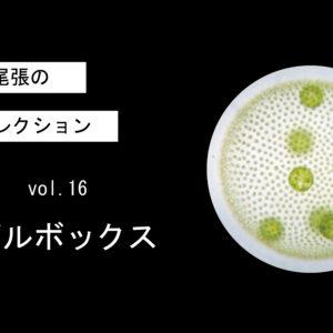 藻ガール尾張の藻類コレクション vol. 16 ボルボックス
