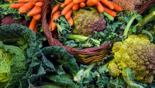 2020年注目のスーパーフード『スーパー藻類』!-スピルリナの4つのトレンドポイント-