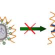 抗ウイルスが報告されている藻類由来物質スピルラン-スピルリナの効能-