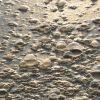藻類を利用した廃水処理システム