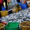 水産分野おける藻類の利用 -現状と将来性-